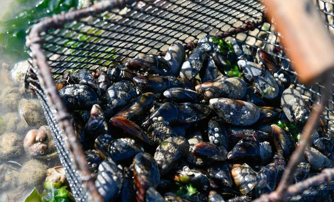 Comment pratiquer la pêche aux moules?